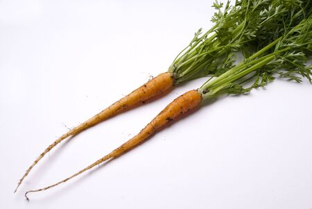 two freshly picked young carrots complete with green tops Stock Photo