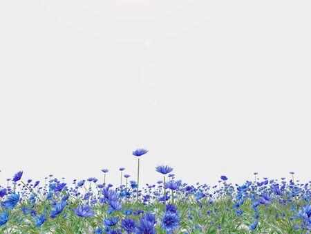 Meadow van blauwe cornflowers op een witte achtergrond volledig