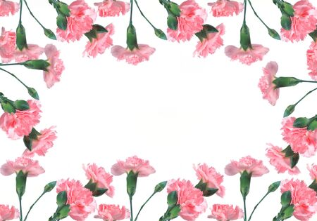 pink carnations on a white background photo