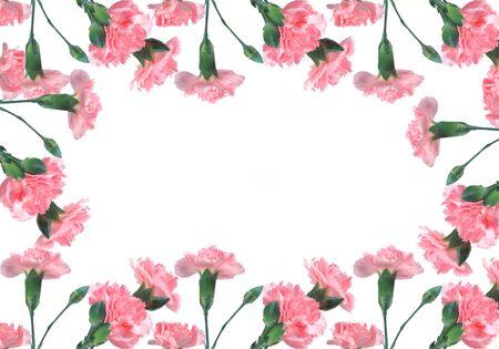 Roze carnations op een witte achtergrond