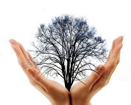 twee handen bedrijf kale boom op witte achtergrond Stockfoto