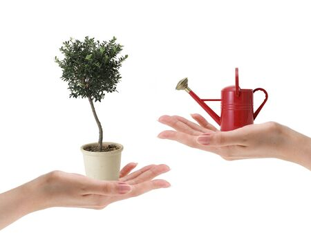 female hand holding small red watering can and tree