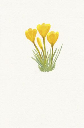 hand painted watercolor painting of yellow crocuc Stock Photo
