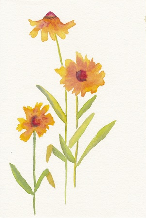 hand painted watercolor painting of orange daisies