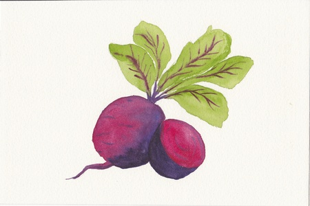 hand painted watercolor painting of beetroot