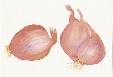 hand painted watercolor painting of three onions Stock Photo - 18425614