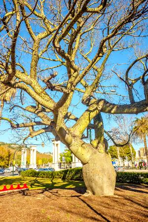 ornamental ceiba chodatii tree in park in malaga