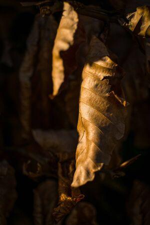 fallen leaves on forest floor Stock Photo