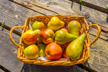basket of cox apples and blush and conference pears Stock Photo