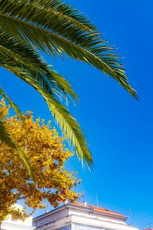 palm tree scene in portugal