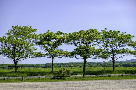 Trees on hill in row on a sunny day with blue sky