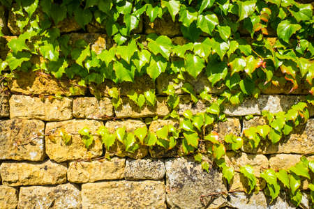 A wall made from traditional English Cotswold stone UK