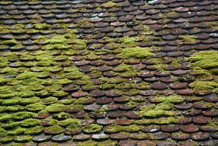 View of a Muddy tile rooftop in Slovenia