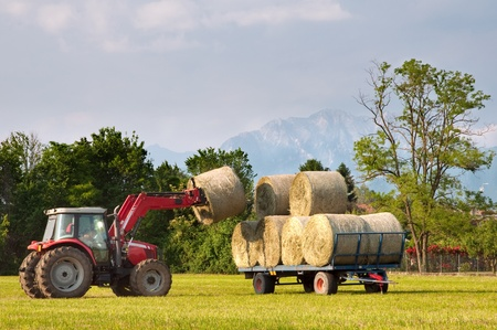 Tractor lifting hay bale on barrow photo