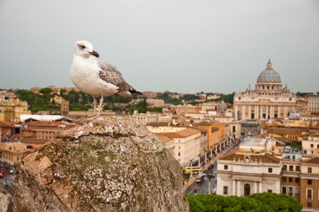 Seagull and St Peters basilica at Vaticano - Italy photo