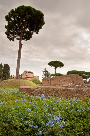 Domus Augustana baths ruins and tree in palatine hill at Rome - Italy Stock Photo - 17976298