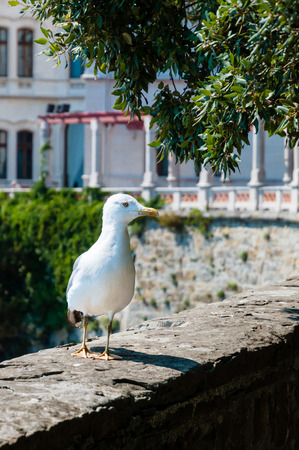 Seagull on a wall of Miramare  photo