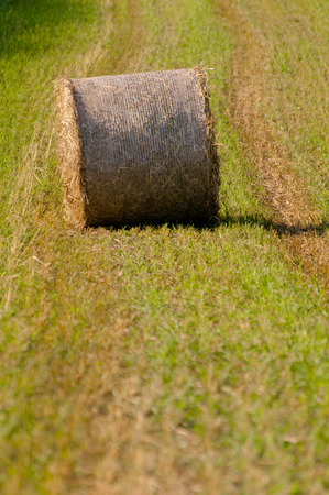 Hay roll on field vertical close up photo
