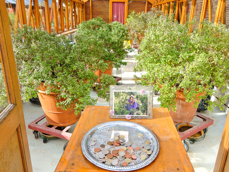 The sacred Tulasi tree (Ocimum Sanctum) in greenhouse with a tray for donations.