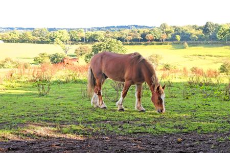 Horse on pasture eat grass. Stock Photo