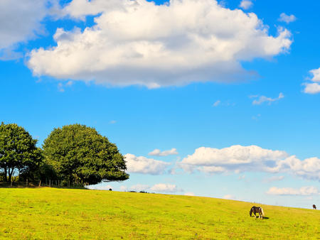 White cloud over a pasture of succulent grass for the horses.