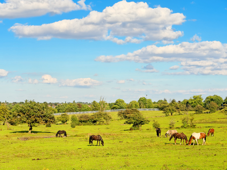 rampant: Pasture for horses with lush grass. Stock Photo
