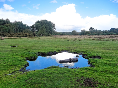 heathland: Sutton Park has open heathland, woodlands, seven lakes, wetlands, and marshes - each with its own rich variety of plants and wildlife, some rarely seen in the region.