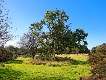 Sutton Park has open heathland, woodlands, seven lakes, wetlands, and marshes - each with its own rich variety of plants and wildlife, some rarely seen in the region.