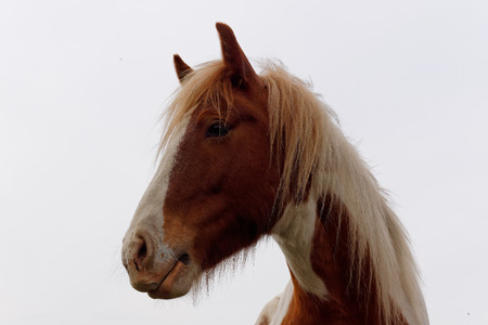 Close up of a horses head in the pasture.