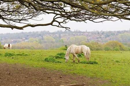 Horse in the pasture. Stock Photo