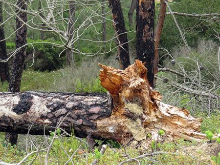 tree dead: Albero morto vicino