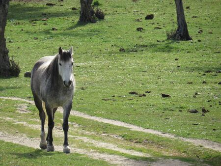 Grey horse photo