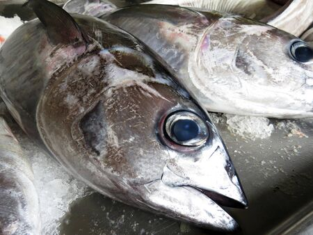 fishmonger: Tuna on a fishmonger