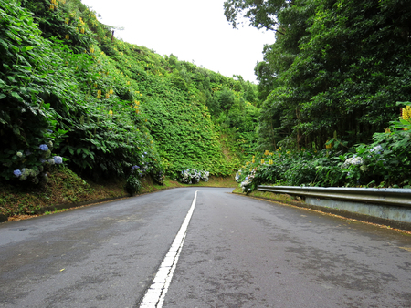 twisty: Road, Azores, Portugal