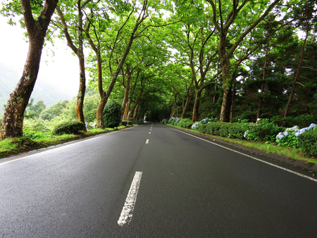 twisty: Wet road, Azores, Portugal