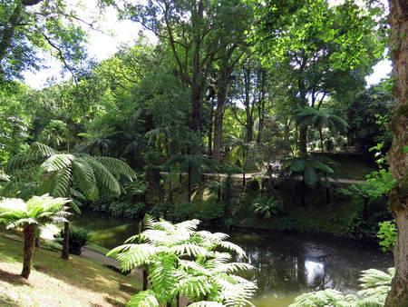 terra: Water channel in Terra Nostra park, Azores