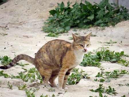 domestic: Domestic cat Stock Photo