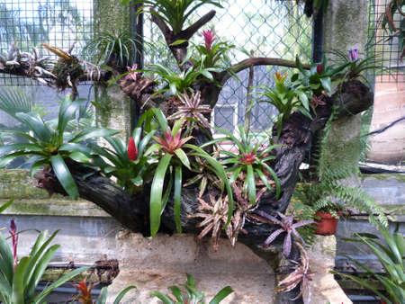 Greenhouse at Xcaret park - México Stock Photo