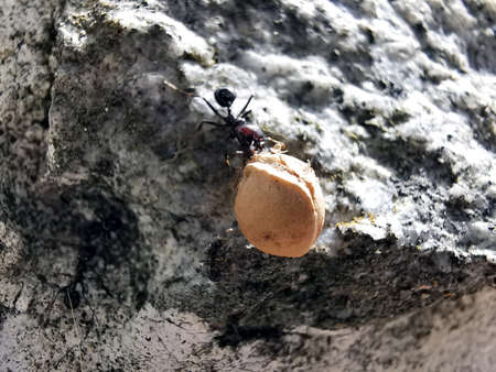Ant carrying seed