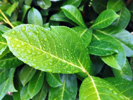 Macro water drops on leaves Stock Photo