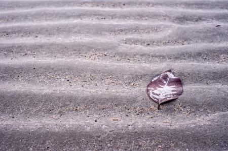 coastal feature: Leaf on sand background