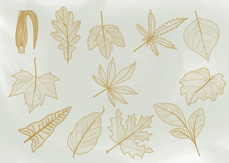 Set of sheets of different shapes, size, edges and nerves. In one ink, giving the appearance of being handmade or drawn, for use in any project. Illustration