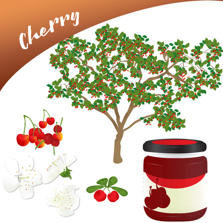 Vector of delicious fruit ideal for desserts and jams, in this you can see the tree, its flowers and the fruit, if you miss the tasty jam that is in a jar.