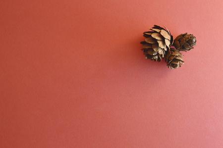 Dried potpourri elements