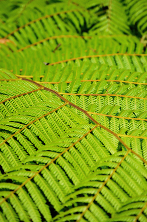 Wild vegetation in rainforest, ideal for your botany projects or nature publications. Banco de Imagens