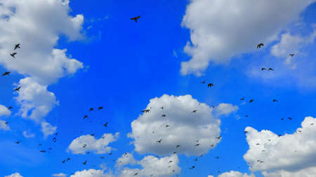 Beautiful blue sky with birds in flight.