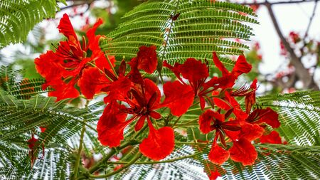 Malabar beautiful colorful flowers Stock Photo