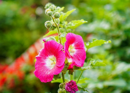 Flower bloom with beautiful cool weather eye comfort. Stock Photo