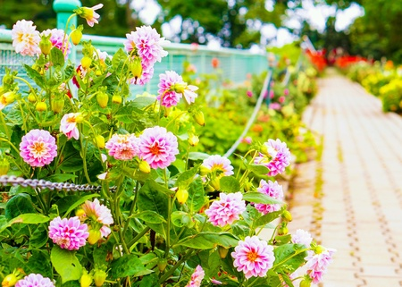 Many pink flowers look beautiful and feel cheerful at realism. Stock Photo