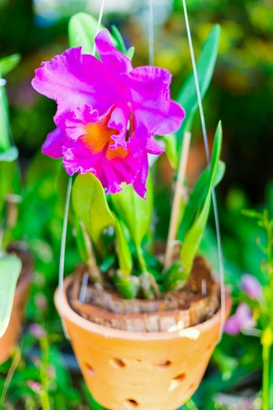 Orchids bloom beautiful
